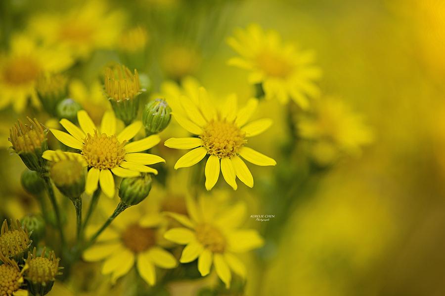 Photo Fleur Macro